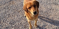 Sevimli Köpek hırsızdan kurtardı.